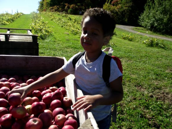 Tristan picking apples