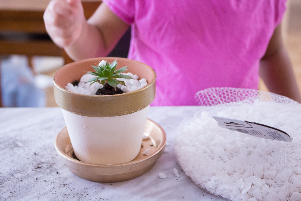 Succulent Love | Tips For Replanting Succulents