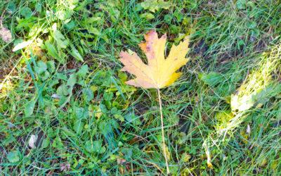 Grateful Sunday: Easy Like Sunday Morning