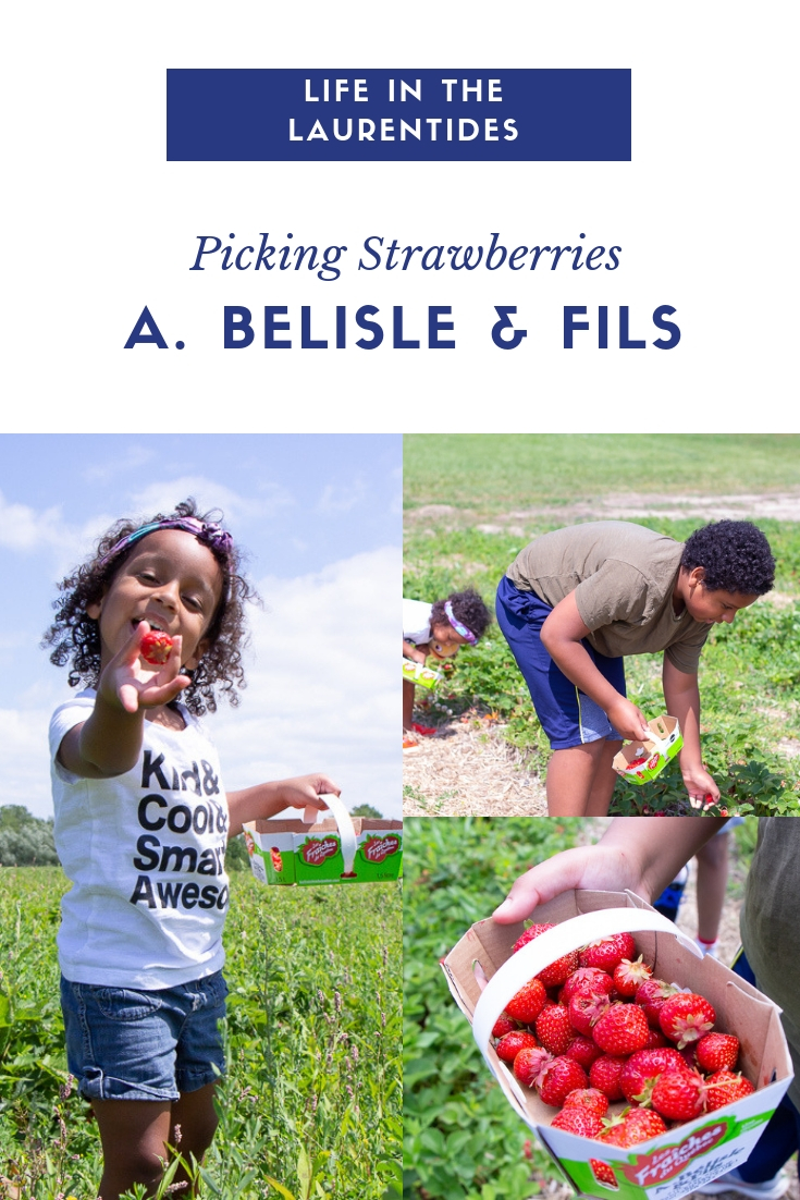 Picking Strawberries A. Belisle & Fils | Life In The Laurentides