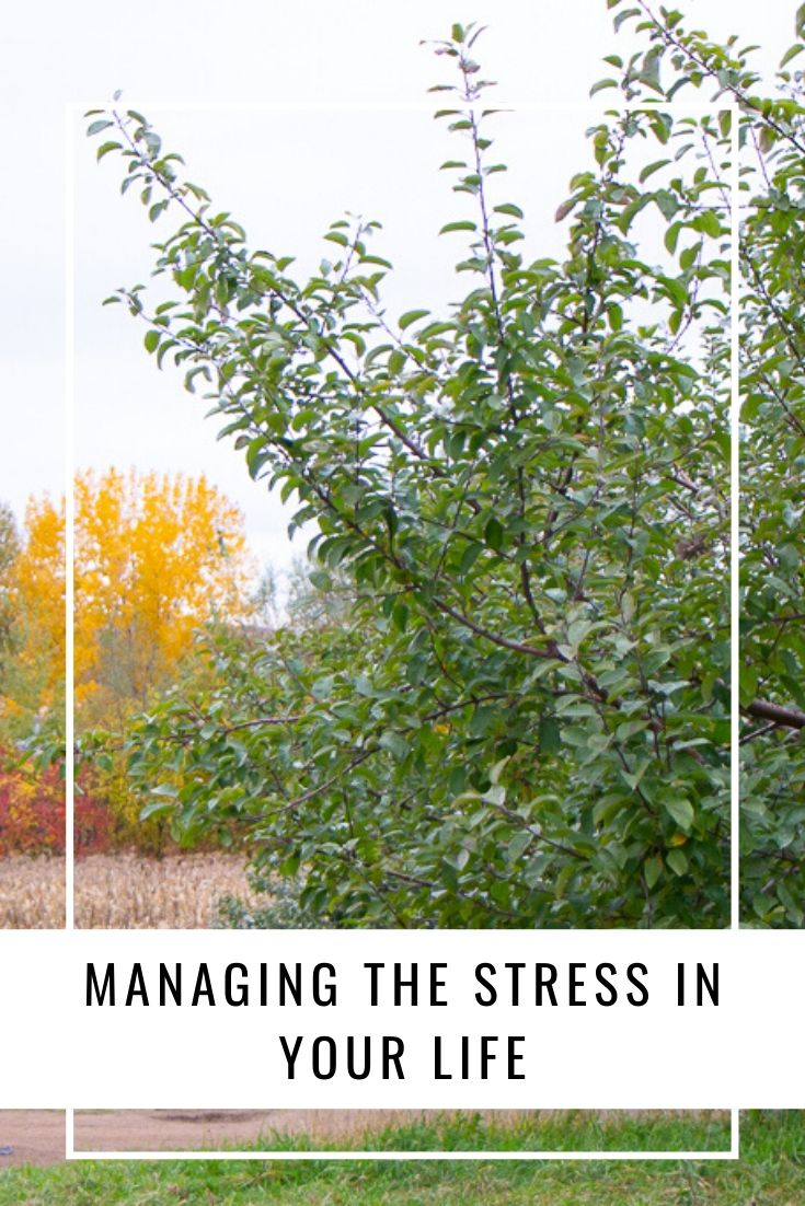 Managing The Stress In Your Life