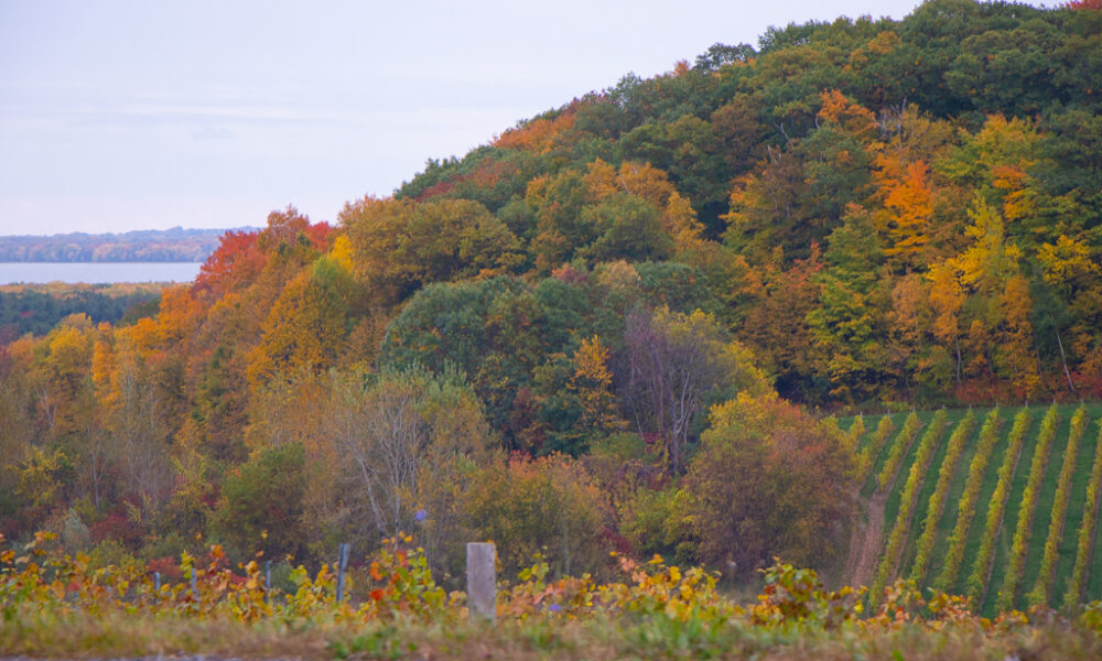 Essential Hiking Safety Tips for Fall